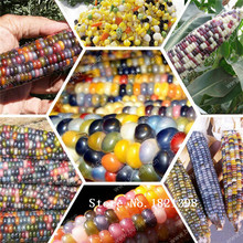 Rainbow corn seeds, vegetables seeds, grains and miscellaneous good quality maize seed, 10 particles / bag(China)