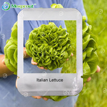 100PCS Italian Lettuce Seeds Good taste , Easy to Grow, Professional Pack, Great Salad Choice ,DIY Home Garden Seeds Vegetables