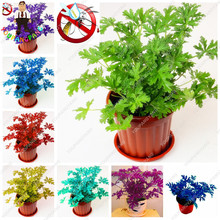 100 pcs Riddex Plant Seeds Mosquito Repelling Grass Mozzie Buster Sweetgrass. Garden & Home Bonsai Plant Indoor Plant