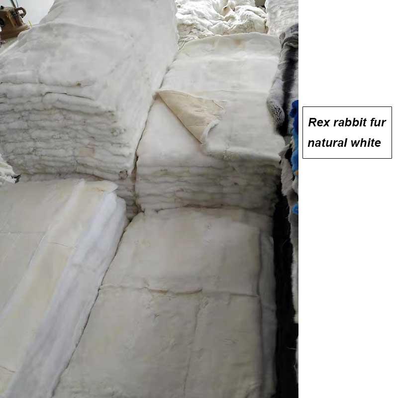 rex rabbit plates natural white
