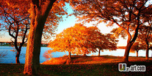 Maple leaf painting reproduction canvas prints landscape of beautiful trees artwork for house decoration16''x32'' '