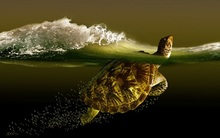 Living room home wall decoration fabric poster turtle sea wave turtles ocean waves bubbles underwater 4 size
