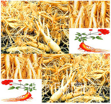 100 Seeds A Pack New Seeds 2017!Chinese Ginseng , Panax ginseng Seeds , Potted Bonsai Plant Flower Seeds for Home Garden(China)