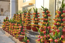 AAA 2016 Bonsai pitaya Seeds 200pcs 10kinds mix furit Seeds Novel Plant for Garden Free Shipping