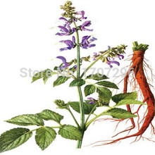 Traditional Chinese Specially Good Effect Herb Salvia seeds - 10 pcs / lot(China)