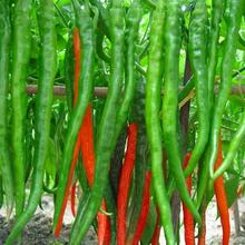 Hot Selling Long red and Green Chilli Pepper Seeds Ornamental Fruit Vegetable Seeds Patio Potted Plant Pepper Seeds - 120 PCS(China)