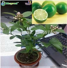 Promotion! 50 seeds Lemon seeds Indoor, outdoor , BONSAI seeds Edible Green Lemon seeds, organic food, tea gift