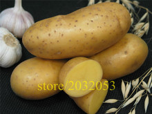 potato seeds 200 Empress Vegetable seeds from china  NO-GMO  for home garden ,best nutrition for dinner kids love vegetable