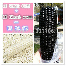 Free Shipping 10 black corn and10 white corn  Vegetable Seeds ORGANIC DELICIOUS AND SWEET KERNELS Fruit seeds