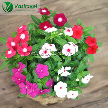 20 Seeds Vinca Rosea Madagascar Periwinkle Colorful Long-bloom DIY Home Garden Easy-growing Bonsai Perennial Container Landscape(China)