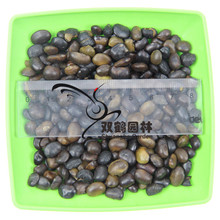 Sale of new mining japonica seed - japonica net seed - Seeds of new seed grain full 200g/lot