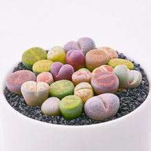 Marseed 100% Nature 100Pcs Lithops Seeds Perennial Garden Bonsai Fleshy Plants Potted Seeds Grown in the Garden or House SS238