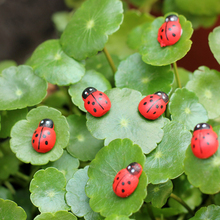 APRICOT 10pcs/lot Cute Mini Ladybugs Garden Miniatures Artificial Micro Landscape Wodden Handmade(China)