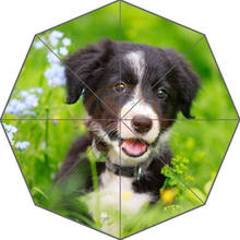 Original Custom Border Collies Black Puppy Picture Auto Foldable Umbrella