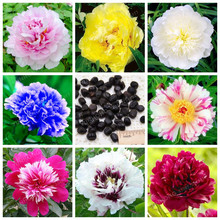 10 Pcs/Lot Paeonia Lactiflora Seeds Heirloom Tree Peony Seeds Hardy Perennial Bonsai Plant Home Garden Potted Flowers(China)