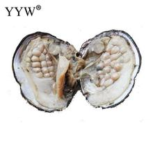 Natural Real Pearls in Oyster Pearls With 6-7mm AAA Pearl per Vacuum-pack Shell Wish Pearl luxury DIY Jewelry Making