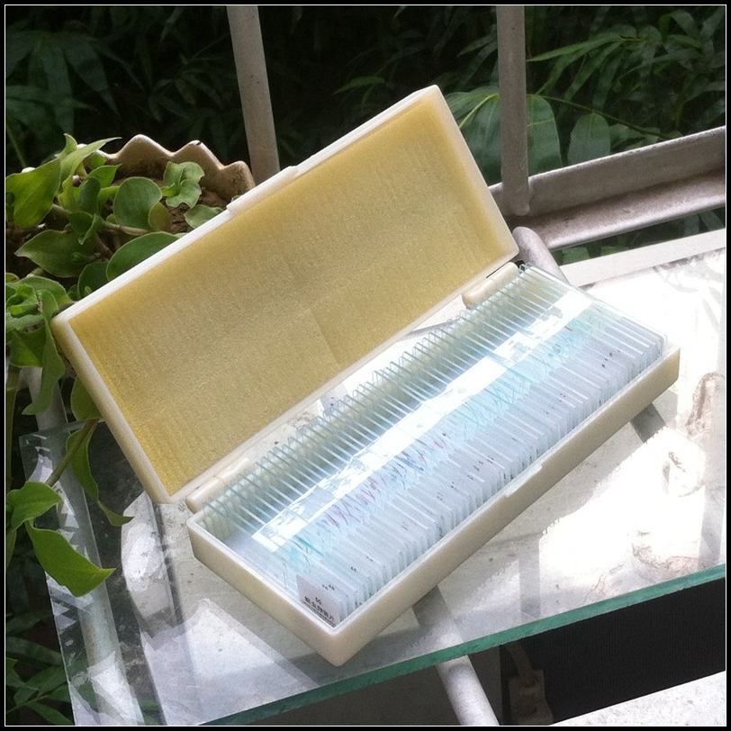 New 50 pcs  Biological Microscope Slides Cell Specimen Microscope Sliders Specimen Cell Biological Experiments Biopsy Samples<br>