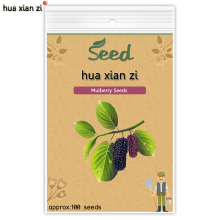 HUA XIAN ZI Black Mulberry Seeds Morus Tree Garden Bush Blackberry Fruit Seed DIY Home Garden 100 seeds/bag