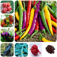 200pcs/bag Carolina Reaper, hot chili seeds Organic Vegetable Rainbow Bell Ghost Pepper seeds, Non-GMO House plants for garden(China)