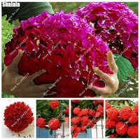 Happy-Farm-Bonsai-Hydrangea-Seed-China-Red-Rounded-Hydrangea-Flower-Seeds-Natural-Growth-For-Home-Garden.jpg_200x200