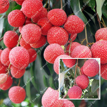 10 pieces One of the Four Southern Chinese Fruit Litchi Seeds Diet Quality Goods Nutrient-rich Lychees Red Traditional Plant(China)