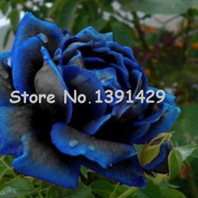 11.11 On Sale!!! Free Shipping 120 PCS Seeds China Rare dark blue Rose Flower Rare Color Rich Aroma DIY Home Garden Rose Plant +(China)