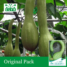 1 original pack 8 pcs / bag Pumpkin Seeds, Home Garden Landscape Plant Seeds(China)