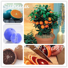 30pcs Potted Edible Fruit Seeds Bonsai Climbing Orange Tree Seed Edible Fruit Sweet Juicy Fruit Bonsai Mandarin Orange Mix Color(China)