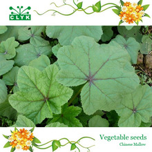 100 Particles / Bag Chinese Mallow Seeds Callirhoe Involucrata health Vegetables Seeds DIY Home Garden