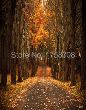 5X7ft vinyl photography background  Computer Printed The forest trail  Photography backdrops for Photo studio  CM-3714<br><br>Aliexpress