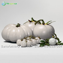 New Seeds Rare WHITE Tomato Seeds Very Tasty Nutritive Heath Vegetables Seeds 100PCS Heirloom Tomato Seeds