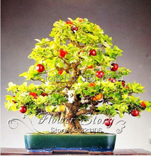 20 Cherry Tree Seeds, DIY home garden bonsai plant , firm- juicy flesh fruit ,Pollinate with any other variety.(China)