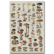 Mushroom Chart Science Art Silk Poster Fabric Print 12x18 24x36 inches Biology Education Wall Picture Home Room Decor