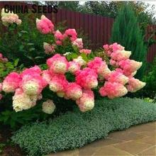30pcs/bag Hydrangea Seeds Rare Bonsai Tree Hydrangea Flower Seeds Potted Diy Plant For Home Garden Decoration Sementes