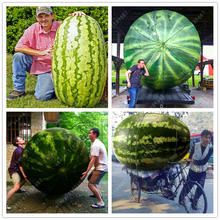 30/bag giant Watermelon Seeds ,Sweet Taste Vegetables and fruit seeds very giant delicious food plant pot for home garden