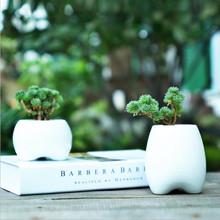 Meaty Plant Flowers The New White Porcelain Meaty Plant Container Teeth Shape Ceramic Flower Pot
