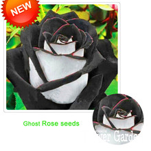 Big Promotion!Rare White Black Edge Rose Seeds Plants Potted Rose Flower Seeds Balcony for Home Garden 100 pcs/Bag,#M9WDWC(China)
