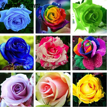 100Particle / bag , Free Shipping  Rose Seeds Include Pink Black White Red Purple Green Yellow Blue Colors
