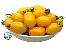 Oriole yellow tomato seeds - storage and transportation , suitably protected and open field cultivation -200 Pcs