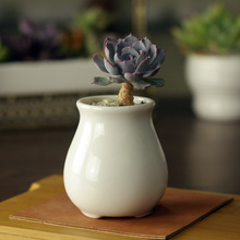 5.3x5.3x7.8cm Creative simple white fleshy old pile with a small ceramic pot belly round flowerpot freeshipping