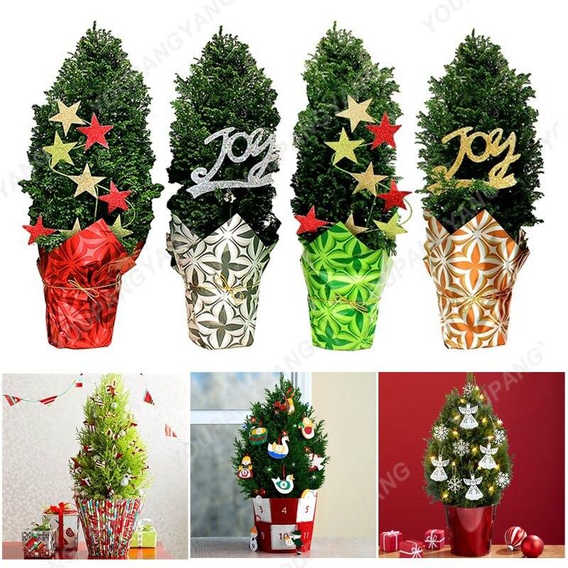 Popular Christmas Trees Farms-Buy Cheap Christmas Trees Farms lots ...