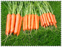 200pcs/bag Radish Seeds Sweet Carrot Vegetable seeds,potted palnts for gome garden(China)