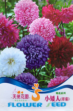 1 pack china aster Seeds, any season is suitable Indoor bonsai flowering plants free shipping