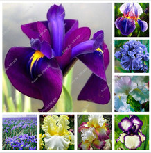 new Iris seeds in pot plant, flower seeds, garden bonsai plant House, free shipping-100 pcs / bag (24 kind color),