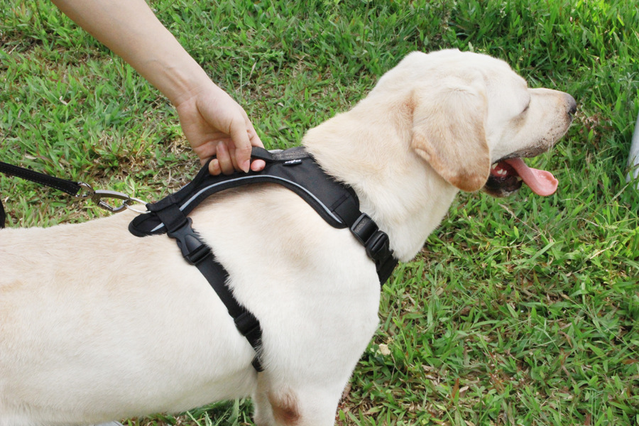 Dog Harness for Large Dogs (10)