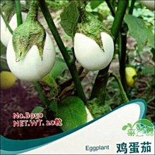 Free shipping/Min 15 usd/ Egg seeds palate type 20 balcony vegetable seeds,garden supplies