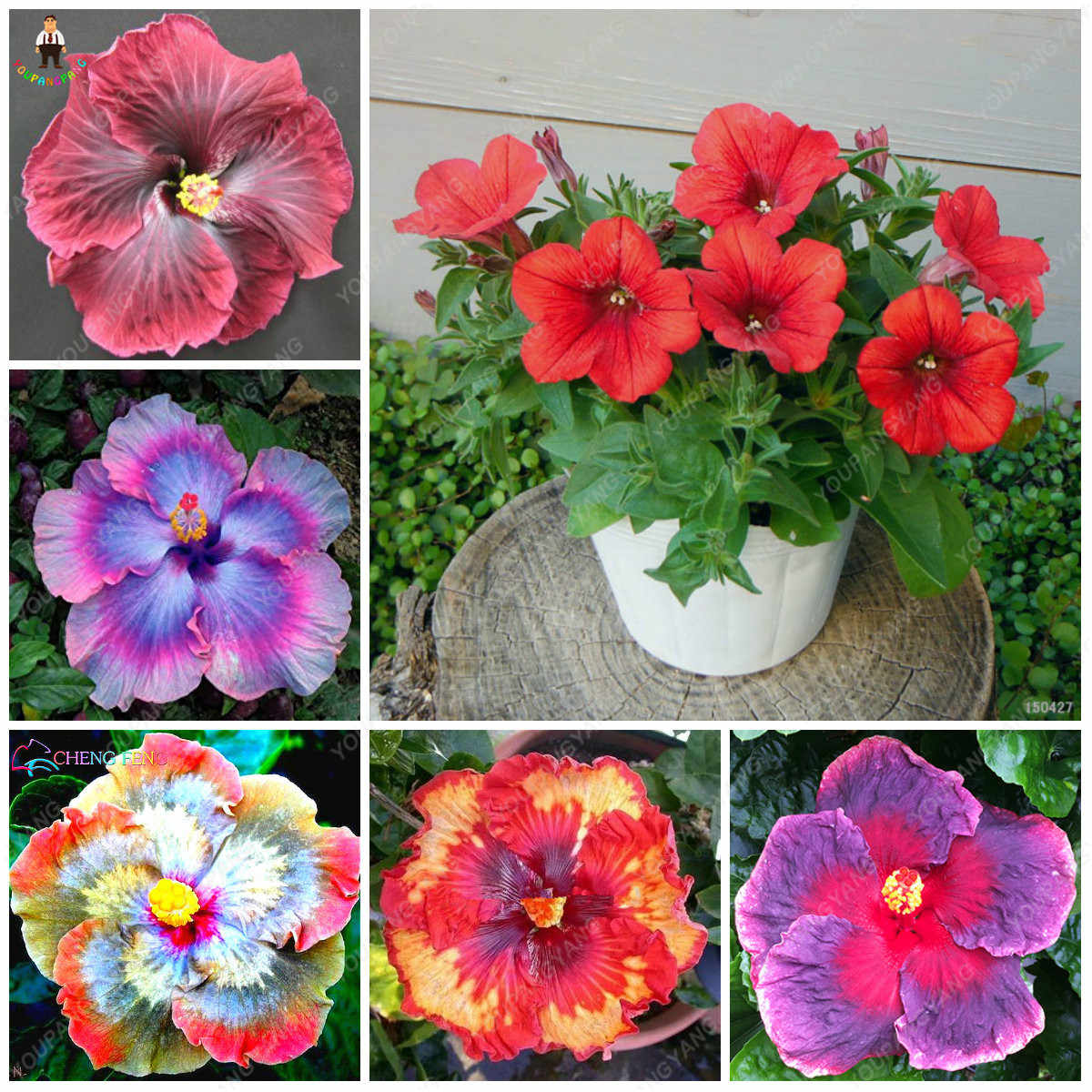 200pcs Giant Hibiscus Bonsai Flowers Bonsaias Mix Color Hibiscus Tree Plating For Flower Potted Plants Garden Decoration