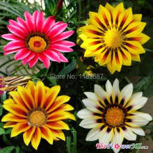 100 pieces /bag Flowers Gazania, Gazania seeds, Flowers seeds the budding rate 95%, (Mixed colors)(China)