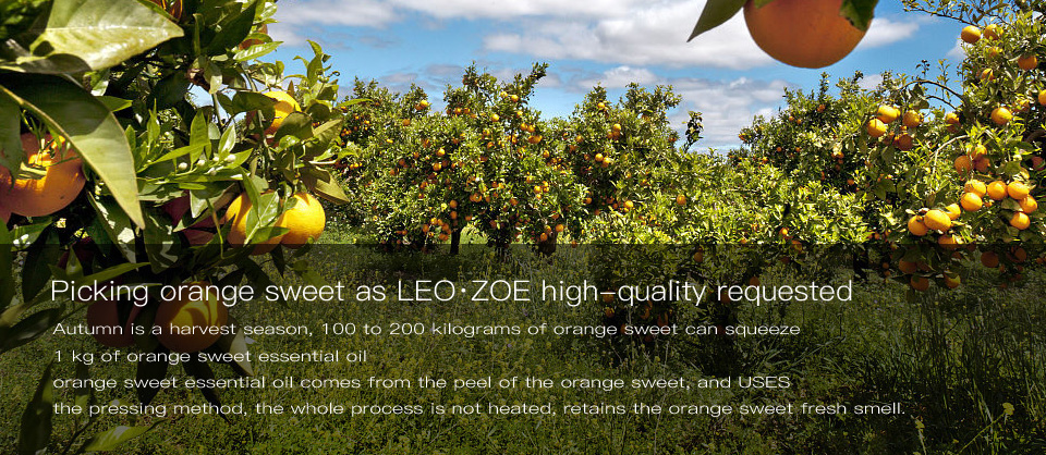 Pure Orange sweet Oil Famous Brand LEOZOE Certificate Of Origin Italy High Quality Orange sweet Essential Oil 10ML 17