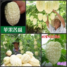 (20 SEEDS) Fresh Organic Taiwan apple bitter gourd, Can be eaten raw, Sweet bitter gourd Balsam pear Vegetables Seeds(China)